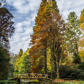 Bridge by Dan Orsa - Landscapes Waterscapes ( clouds, water, sky, waterscape, autumn, green, trees, brown, forest, bridge, landscape, leaves )