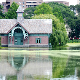 Green reflections by Leslie-Ann Boisselle - Novices Only Landscapes ( water, green, reflections, new york, central park )