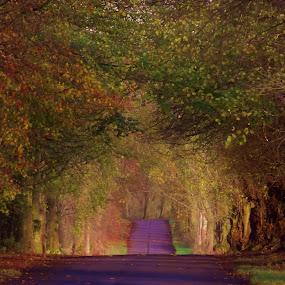 Autumn Road by Craig Skinner - Uncategorized All Uncategorized ( path, nature, landscape )