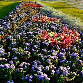 Flower garden by Suzanne Blais - Nature Up Close Gardens & Produce ( garden flowers colors yellow red violet green )