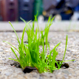 Micro Garden by K. Merl - Nature Up Close Leaves & Grasses ( macro, nature, micro, grass, upclose, micro garden, garden, concrete )