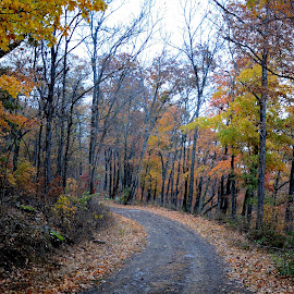 Silent Path in the Nature by Siva Kumar P - Nature Up Close Trees & Bushes ( nature, fall, path, trees, woods, landscape )