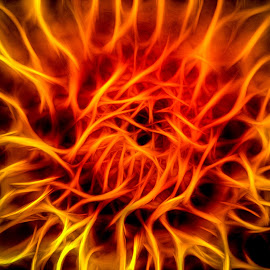 Burning by Calvin Morgan - Abstract Macro ( abstract, plant, garden, nikon d7000, flower )
