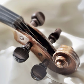 Violin Again by Lisa Ehrlich - Artistic Objects Musical Instruments ( violin, close up, tuning pegs,  )