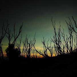 Hutan Mati Papandayan  by Yosea Permana - Landscapes Forests ( mountain, indonesia tourism, indonesia, sunrise, papandayan )