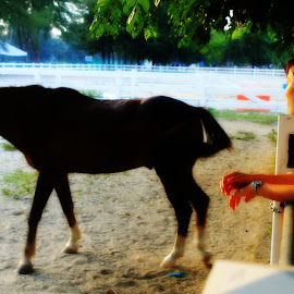 Horse by Lill Yen - Animals Horses ( #kualaterengganu )