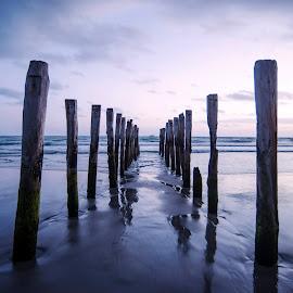 Dunedin by Jodi Bilske - Landscapes Beaches