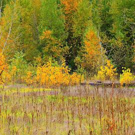 autumn  by Carol Langsford - Landscapes Prairies, Meadows & Fields