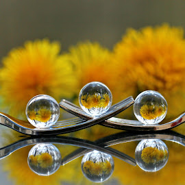 by Dipali S - Artistic Objects Other Objects ( reflection, forks, dandelion, reflections, spheres, refraction, flower )