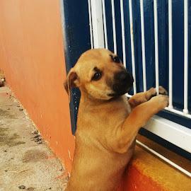 Gorda by Tanja Strma Strmotic - Animals - Dogs Puppies