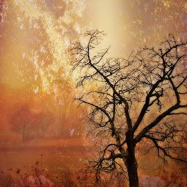 Snovitost by Andrea Šipuš - Nature Up Close Trees & Bushes (  )