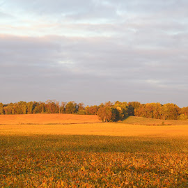 Golden fields of Illinois by Victor Mirontschuk - Landscapes Prairies, Meadows & Fields ( places, travel, sunrise, landscape, fields )