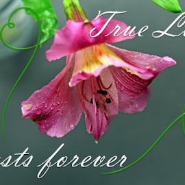True Love by Dipali S - Typography Quotes & Sentences ( optical, optics, illustration, motivation, type, decor, inspiration, calligraphy, card, place, template, element, text, creative, letter, font, art, label, calligraphic, sign, frame, poster, word, typography, letters, headline, graphic, ornate, decorative, captioned, title, words, quote, inscription, classic, note, banner, typographic, abstract, icon, vintage, decoration, advertisement, photo, message, motivational, typo, background, artistic, design )