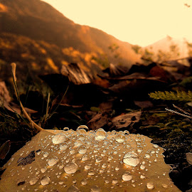 Autumn by Szalai Katalin - Nature Up Close Leaves & Grasses ( autumn, sunset, drops, leaf, wet, leaves, szalaikatee, rain )