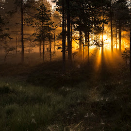 Sunrise in the norwegian forest by Dag Halvorsen - Landscapes Sunsets & Sunrises ( awakening, mystery, moor, forest, sunrise )