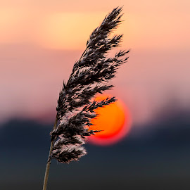 DOF Sunset by Richard Scrimshaw - Nature Up Close Leaves & Grasses
