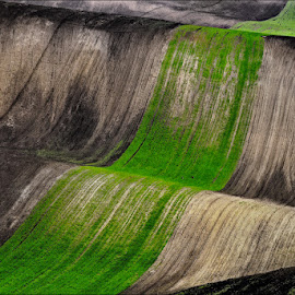 ...from South Moravia... by Ivan Rusek - Landscapes Prairies, Meadows & Fields
