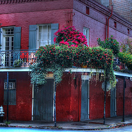 French Quarter Beauty by Barton Bishop - Buildings & Architecture Public & Historical ( new orleans, street, louisiana, french quarter, cityscape )