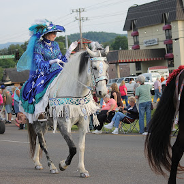How pretty by Tracy Corello - Animals Horses ( parade, horses, horse & rider )