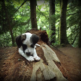 Chopper by Edie Delzer - Animals - Dogs Puppies