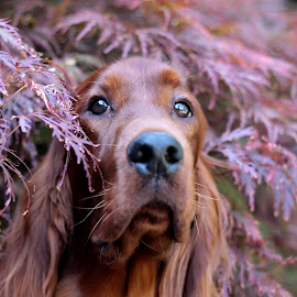 You can't see me here! by Ken Jarvis - Animals - Dogs Portraits