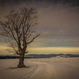 Alone by Mike Forster - Landscapes Prairies, Meadows & Fields ( utazás, erdély, transilvania, winter, tree, fa, tél, travel, landscape, táj )
