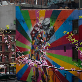 The Flowers of Love by Shawn Taylor - City,  Street & Park  Street Scenes ( wall art, kiss, kissing, new york, flowers )