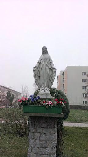 Maryjka Na Kurczaba
