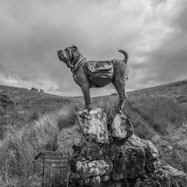 THE CHAMP by Michael Sweeney - Animals - Dogs Portraits ( natural light, scotland, world record dog, uk, glencoe, black and white, michael sweeney, ruffwear uk, scotlandblack and white, adventure, munros, d800, champ, murphy 283, pro, dog, nikon, animal )