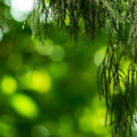 Green Bokehs by Ashutosh Tiwari - Nature Up Close Leaves & Grasses ( bokehs, green leaves, green leaf, green plants, leaf, leaves, bokeh, green bokeh,  )