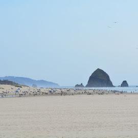 Cannon Beach by Kelli Plona - Landscapes Beaches ( oregon, rock, beach, landscape, coast )