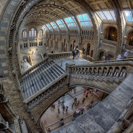 Natural history museum  by Barry Jones - Buildings & Architecture Architectural Detail ( history, building, uk, london, architecture, museum, natural history museum ,  )