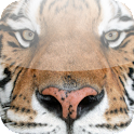 Big Cat App icon