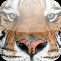 Big Cat App icon