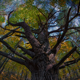 by Walt Mlynko - Nature Up Close Trees & Bushes ( generic event, nature, fall colors, seasons, autumn, what, event, object, botanical, garden )