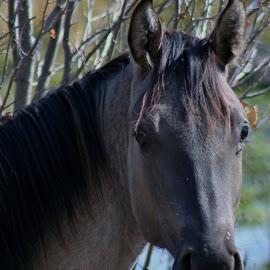 Fall Beauty by Lora Treat - Animals Horses
