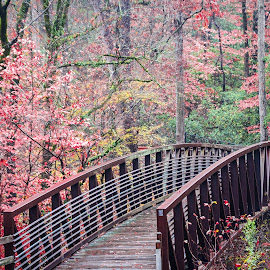Cape Fear River Trail Bridge by Lou Plummer - City,  Street & Park  City Parks ( walking, park, autumn, fall, fayetteville, hiking,  )