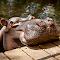 Jessica-The-Hippo-1.jpg
