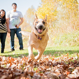 Arya by Angie Braconnier - Animals - Dogs Running ( puppy, dog, running )
