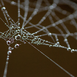 Master Builder by Robert Willson - Nature Up Close Webs ( spiderweb, dew drop, web, places, highlands, usa, spider web, robert willson, willson, nc, bob willson, dewdrops, dew drops, dewdrop )