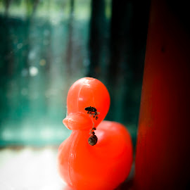 Ugly Duckling Crying by Andreea Alexe - Artistic Objects Toys ( orange, duckling, toy, black teardrop,  )