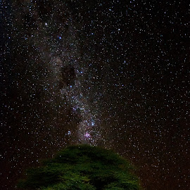 Tree Starscape by Johan Jooste Snr - Landscapes Starscapes ( tree, stars, night shot, starscape, namibia )