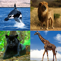 Game Guess The Animal APK for Windows Phone