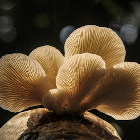 My Family_IV by Shadat Hossain - Nature Up Close Mushrooms & Fungi ( mushroom, natural light, macro, nature, macro photography, nature up close, nature close up, close up, my family, mushrooms )