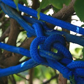 rope knot in the tree by Eric Rainbeau - Artistic Objects Other Objects