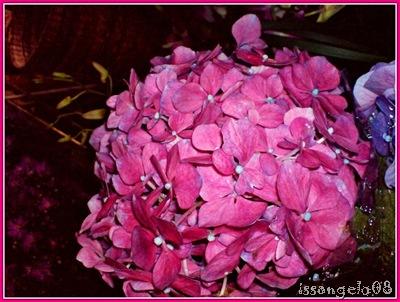 pink million flowers