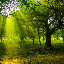 Winter Morning by Topu Saha - City,  Street & Park  City Parks ( university, ray, park, street, forest, morning, rays, dhaka, city, winter, nature, sunrays, ray of light, sunrise, savar, renewal, green, trees, forests, natural, scenic, relaxing, meditation, the mood factory, mood, emotions, jade, revive, inspirational, earthly )