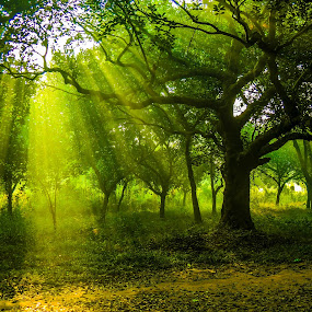 Winter Morning by Topu Saha - City,  Street & Park  City Parks ( ray, street, revive, city, dhaka, #garyfongdramaticlight, bangladesh, nature, emotions, sunrays, ray of light, forests, earthly, university, park, jade, green, mood, forest, scenic, morning, relaxing, rays, #wtfbobdavis, winter, trees, meditation, sunrise, renewal, natural, the mood factory, savar, inspirational,  )