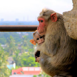A hug from your loved one's always special ! by Mohideen Basith - Animals Other Mammals ( canon, love, mother, travel, photography, portrait, monkey, animal )