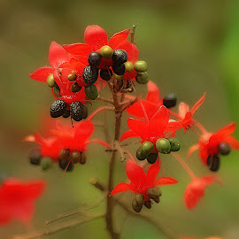 Wild Berries. by Dave  Horne - Nature Up Close Trees & Bushes